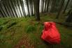 Fotografování v lese