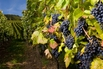 Vinařský den